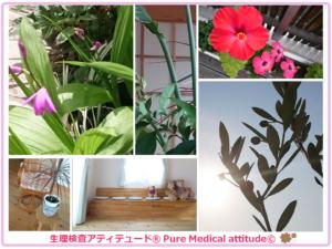 Pure Medical attitudeの空間