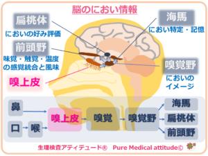 脳のにおい情報