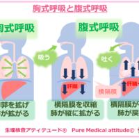 腹式呼吸と胸式呼吸