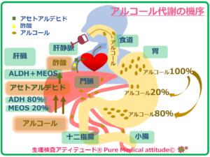 アルコール代謝の機序