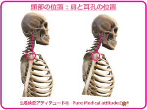 頭部の位置:肩と耳孔の位置