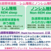 急速眼球運動 レム睡眠とノンレム睡眠