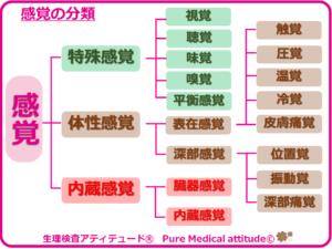 感覚の分類