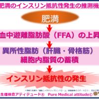 肥満のインスリン抵抗性発生の推測機序