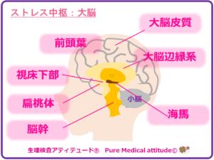 ストレス中枢:大脳